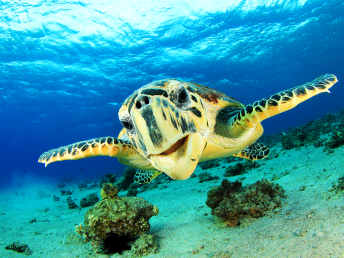tartaruga-fernando-de-noronha-vida-marinha-1