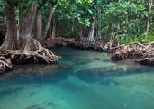 pantanal-620x440