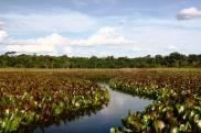 Pantanal_Baiano