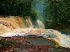 Presidente Figueiredo 2 - Cachoeira do Santuário 7